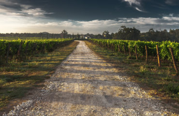 Image of a wine farm