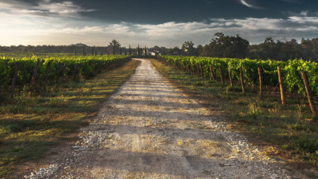 Image of a wine farm